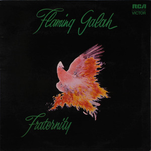 Fraternity Flaming Galah